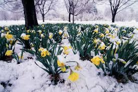 SpringSnow